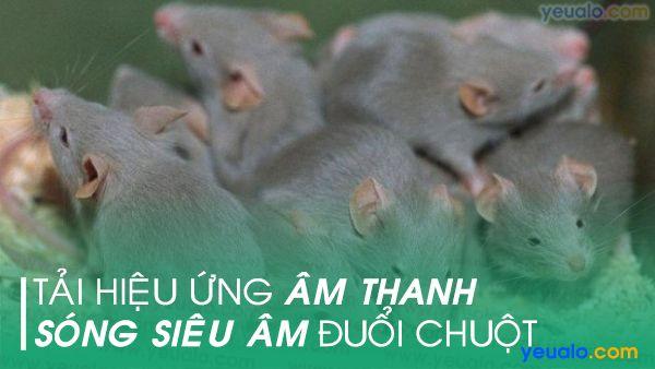 Âm thanh đuổi chuột