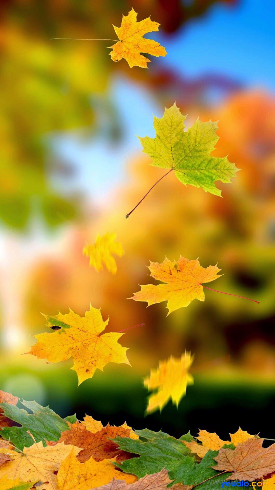 Hình nền điện thoại lá cây mùa thu đẹp 17