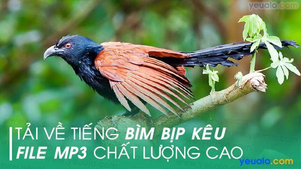 Download tiếng Bìm Bịp và Nhái kêu mp3