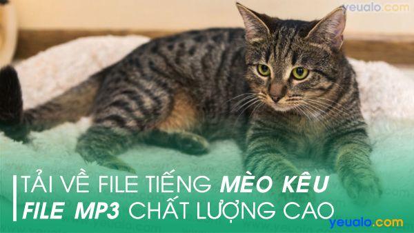 Tiếng mèo kêu mp3