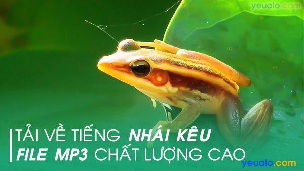 Tiếng ếch đồng kêu chuẩn mp3