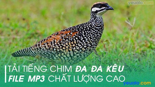 Tiếng chim Đa Đa mp3