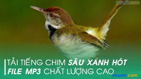 Tiếng chim Sâu Xanh mp3