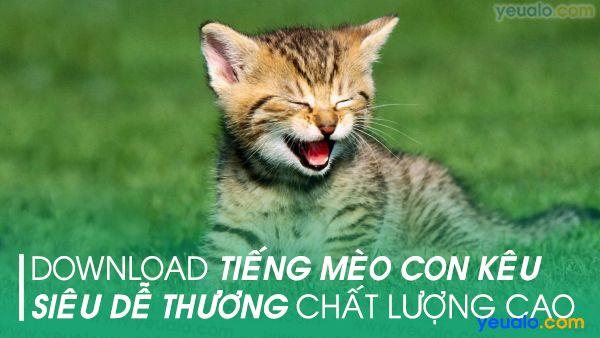 Tiếng Mèo con kêu mp3