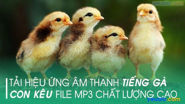 Tiếng gà con kêu