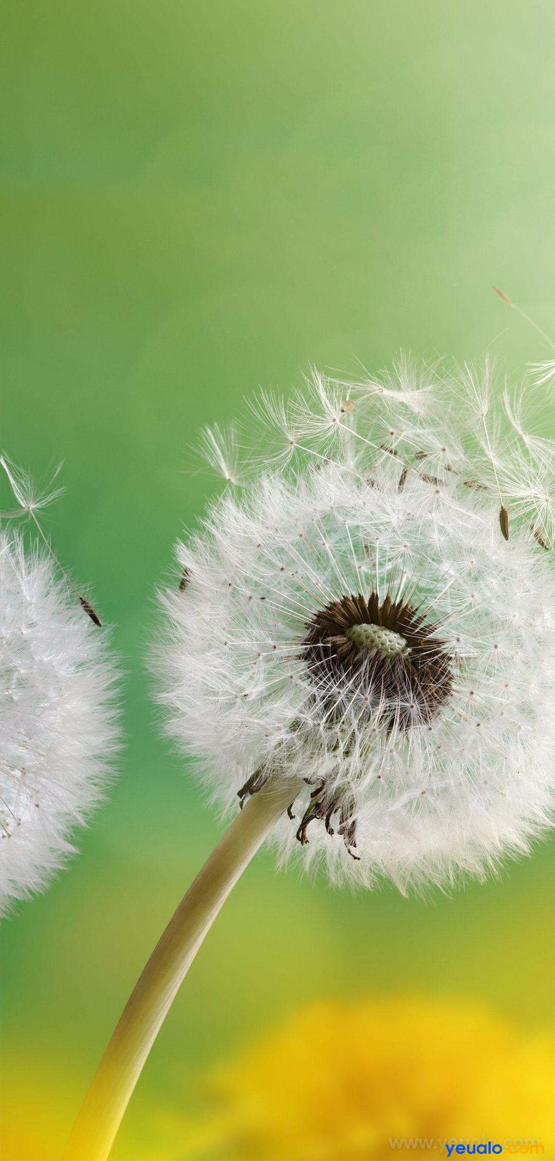 Hình nền hoa đẹp điện thoại Samsung 7